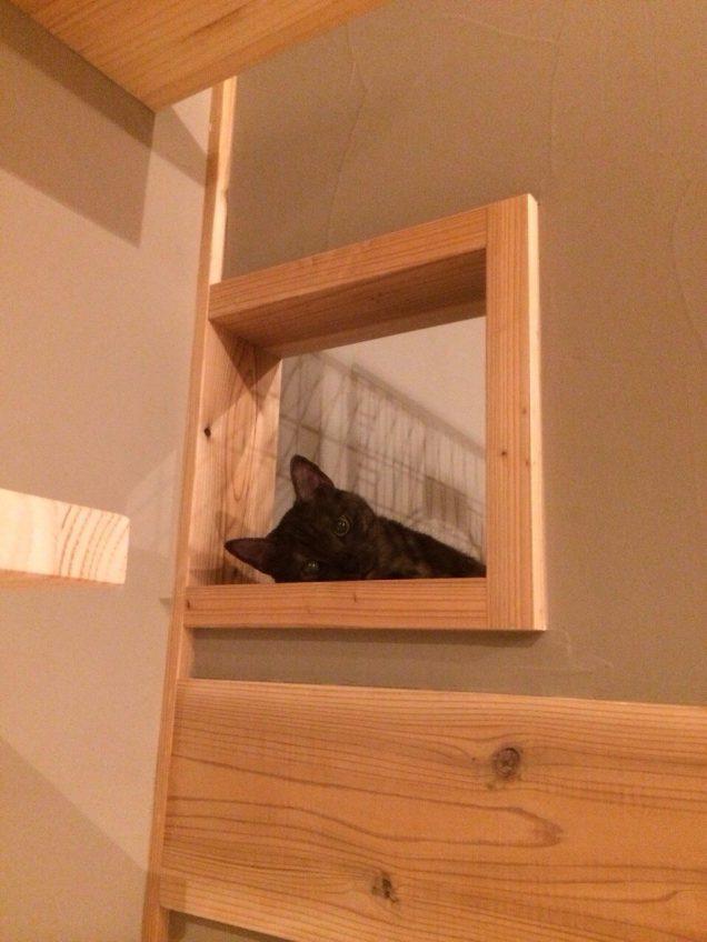 施工事例:愛猫と暮らす